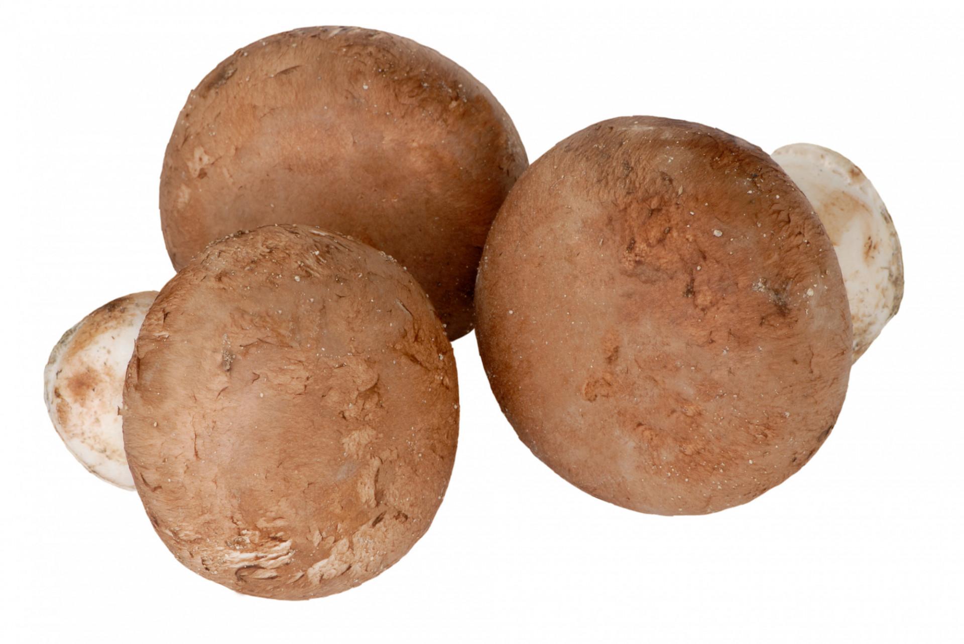 Champignons Blonds Pieds Entiers